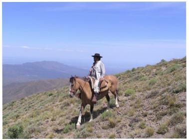 Cavalier en Argentine