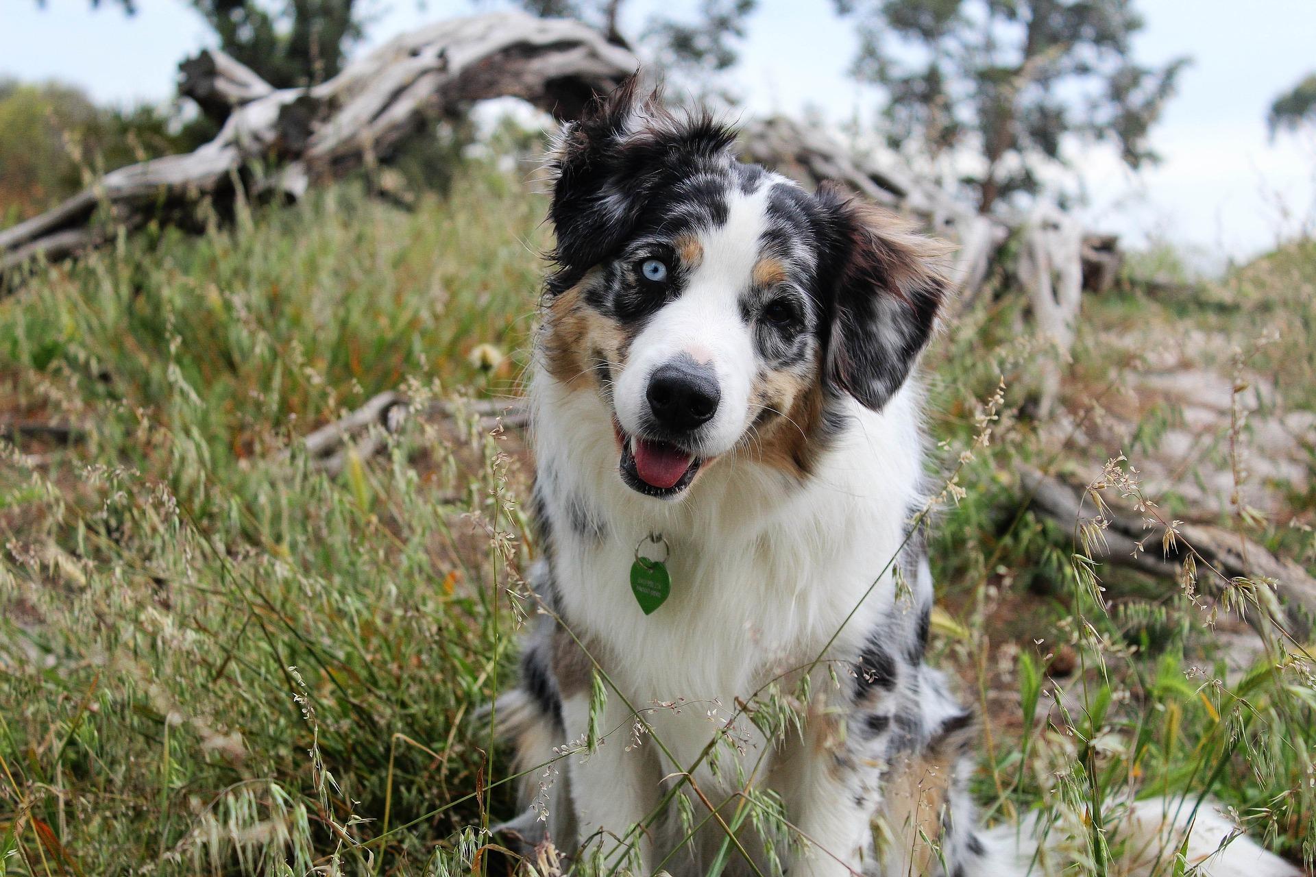 Parcs et réserves interdits aux chiens