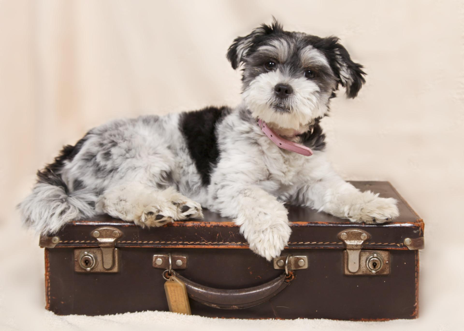 Valise et chien