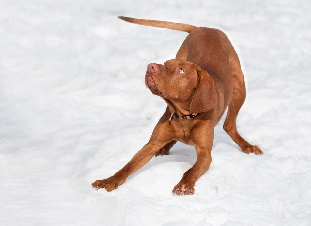 Battement de queue du chien qui joue