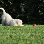 Un chien qui remue la queue est content. Idée reçue n°7