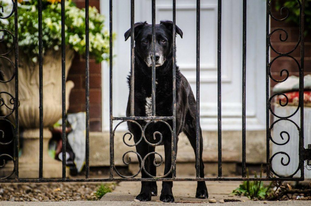 L'importance des sorties chez le chien