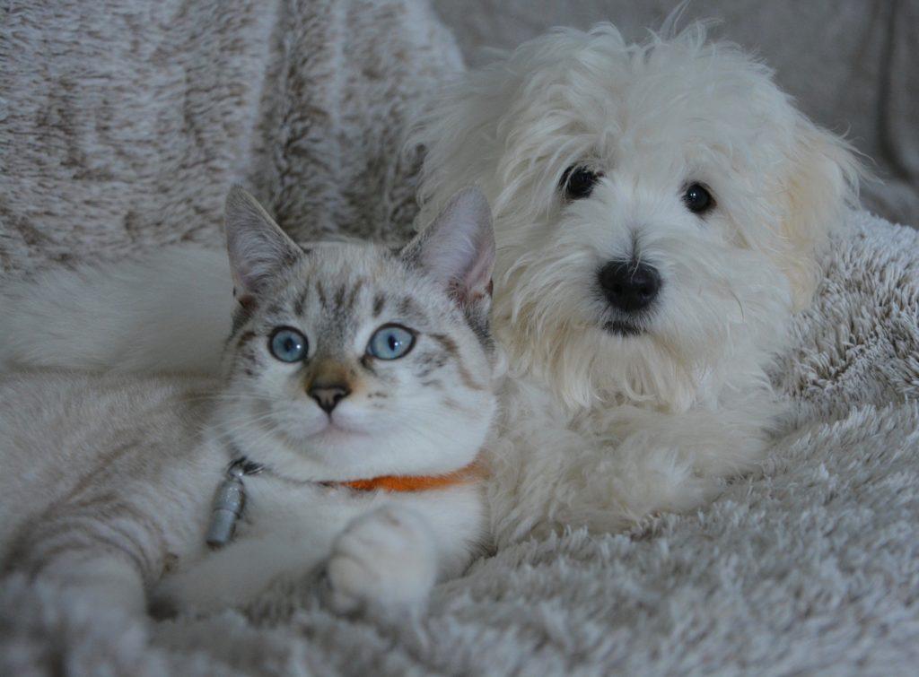 Chien et chat font de très bons amis