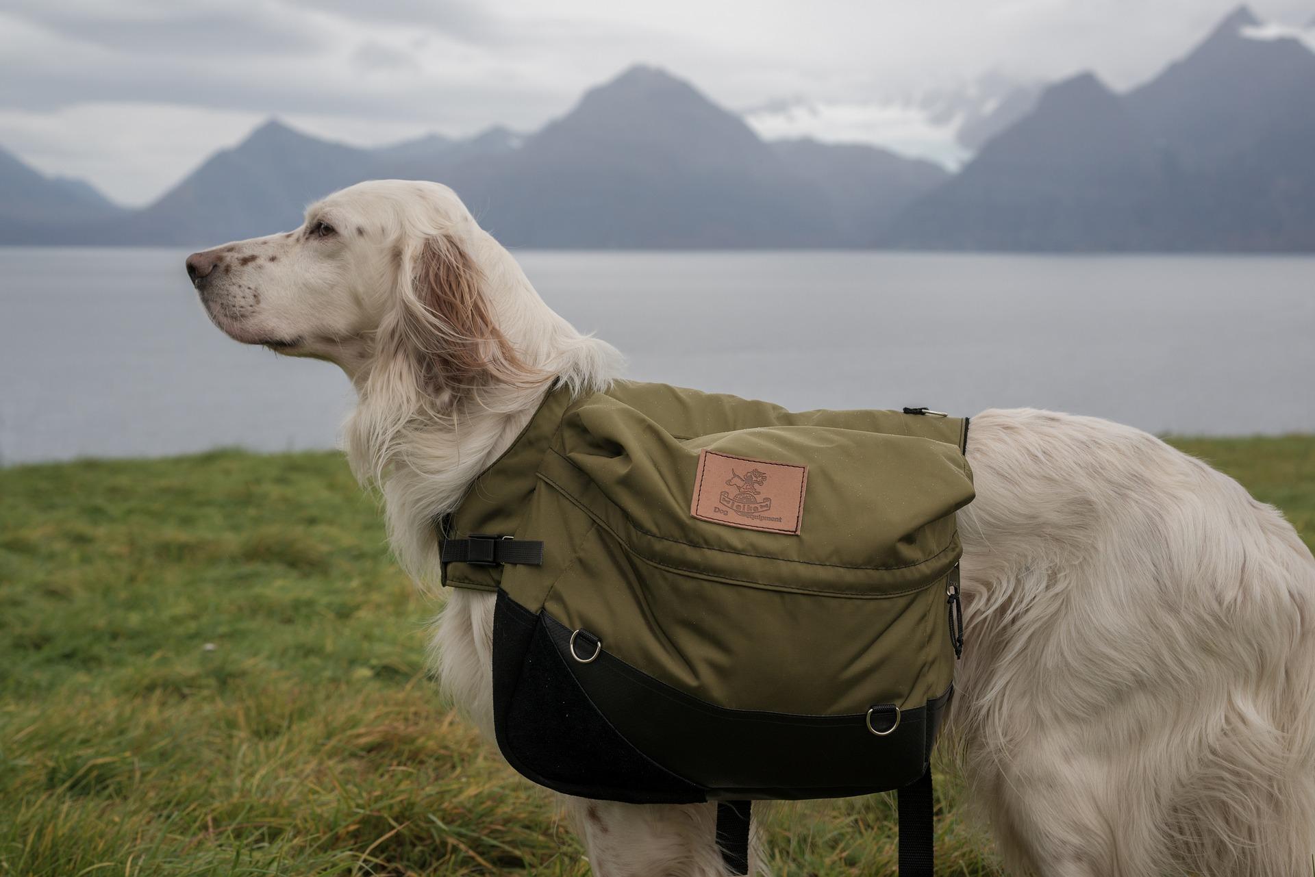 Le sac de bât pour chien sera utile pour les longues randonnées