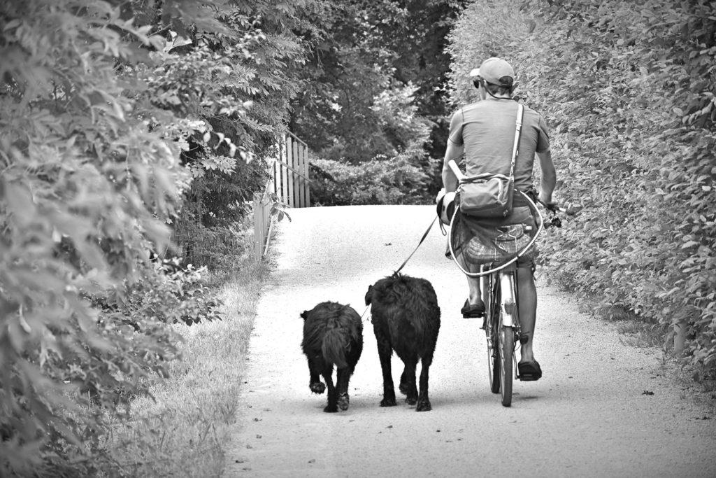 Exercice physique : besoin fondamental du chien