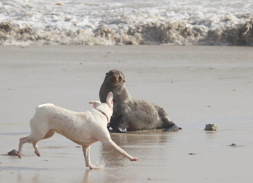 Les rencontres entre chien et faune sauvage peuvent se produire