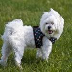 4 types de harnais pour chien actif