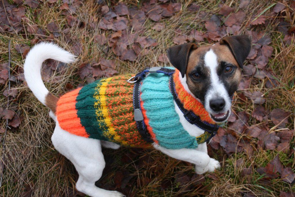 Le harnais peut s'installer par dessus ou dessous un manteau pour chien