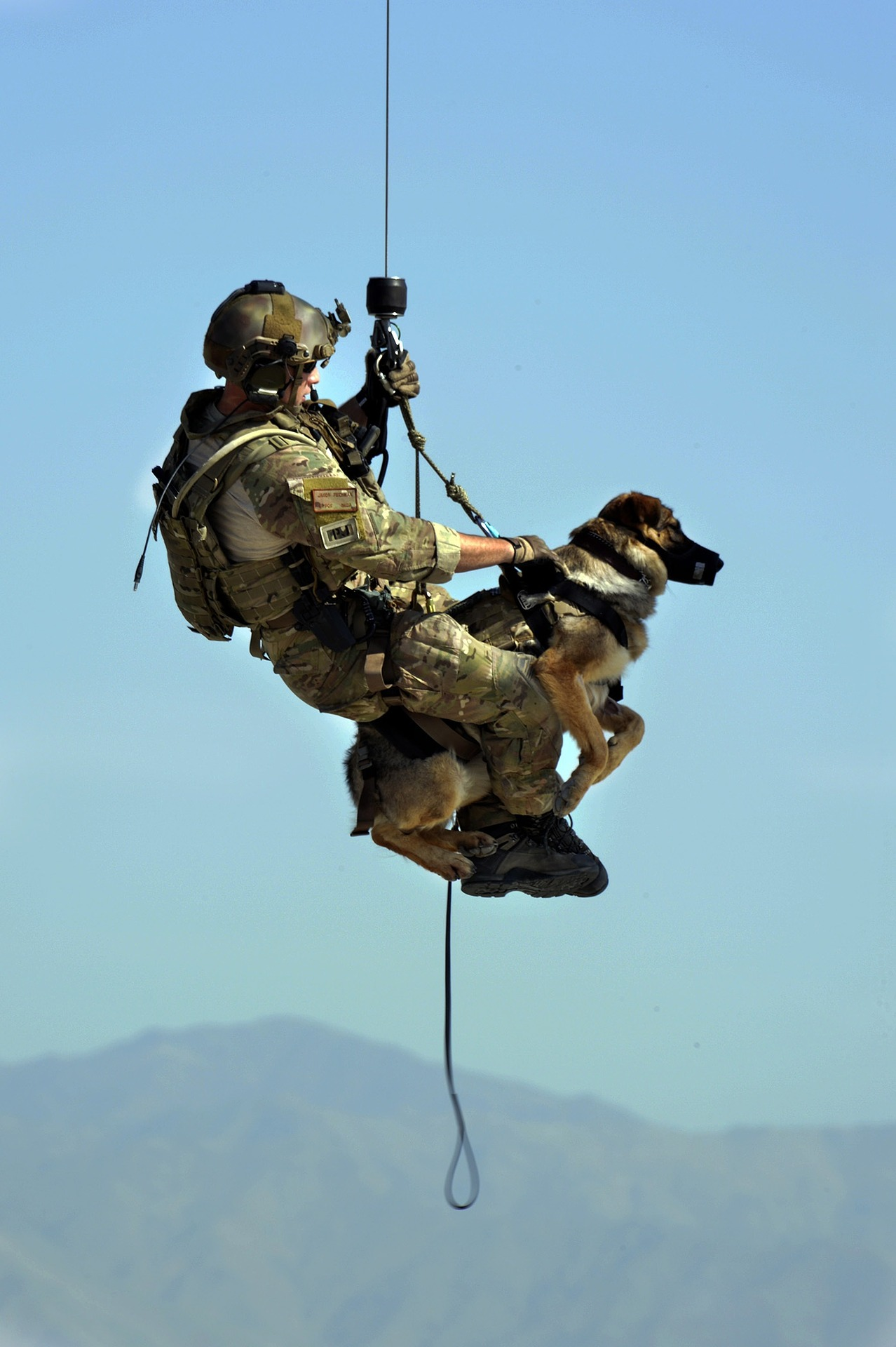 Harnais d'hélitreuillage pour chien