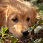 Un grand jardin suffit, pas besoin de promener mon chien. Idée reçue n°4
