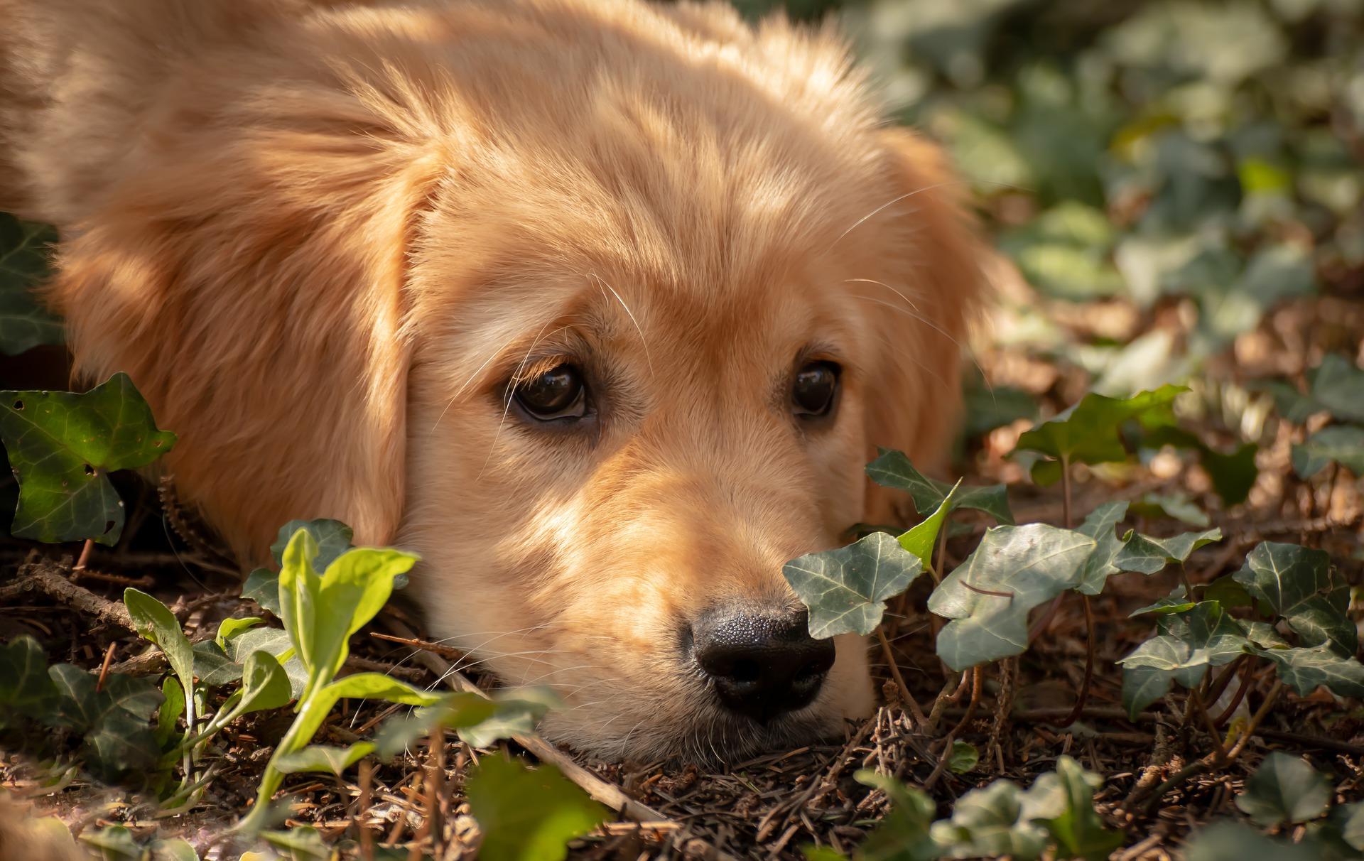 Un jardin peut-il éviter de promener son chien ? Non