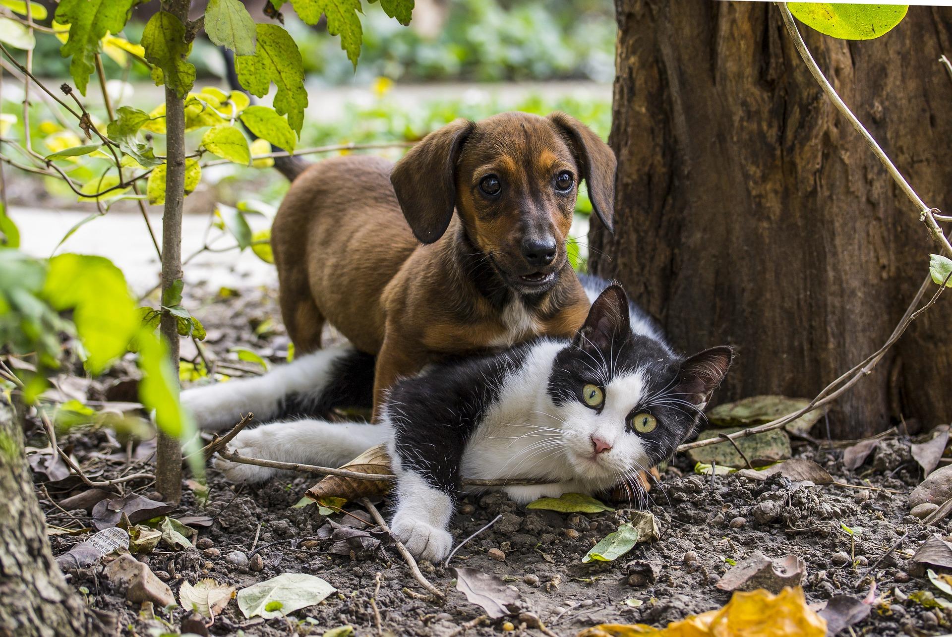 Jeu entre chien et chat : oui c'est possible