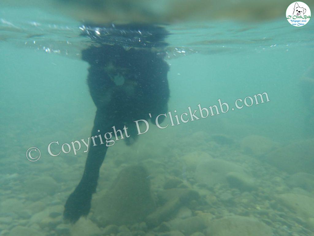 Observation d'un chien en train de nager vu sous l'eau