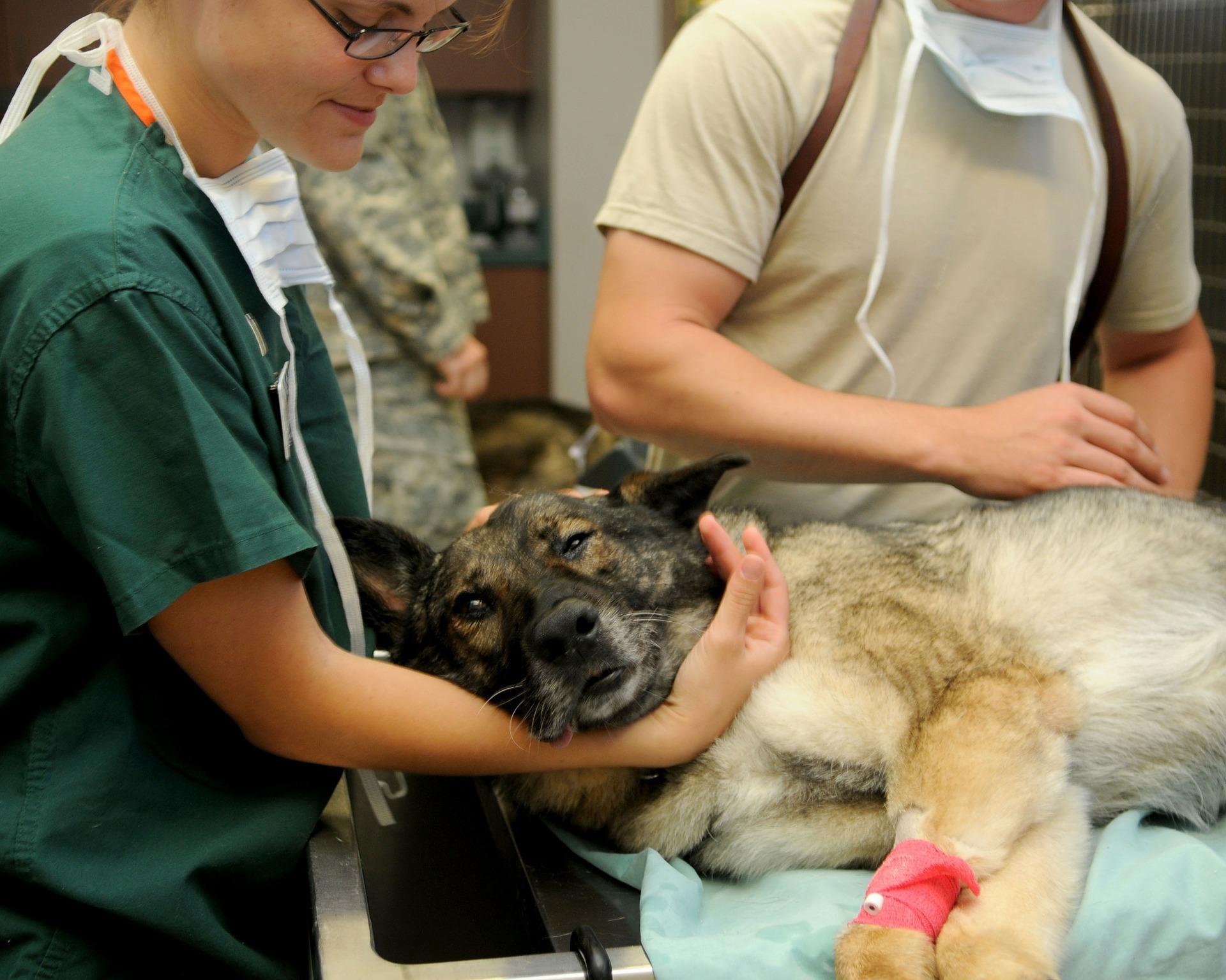 La muselière peut être demandée pour certaines consultations vétérinaires