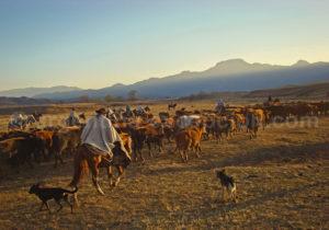 Pampa Grande Argentine