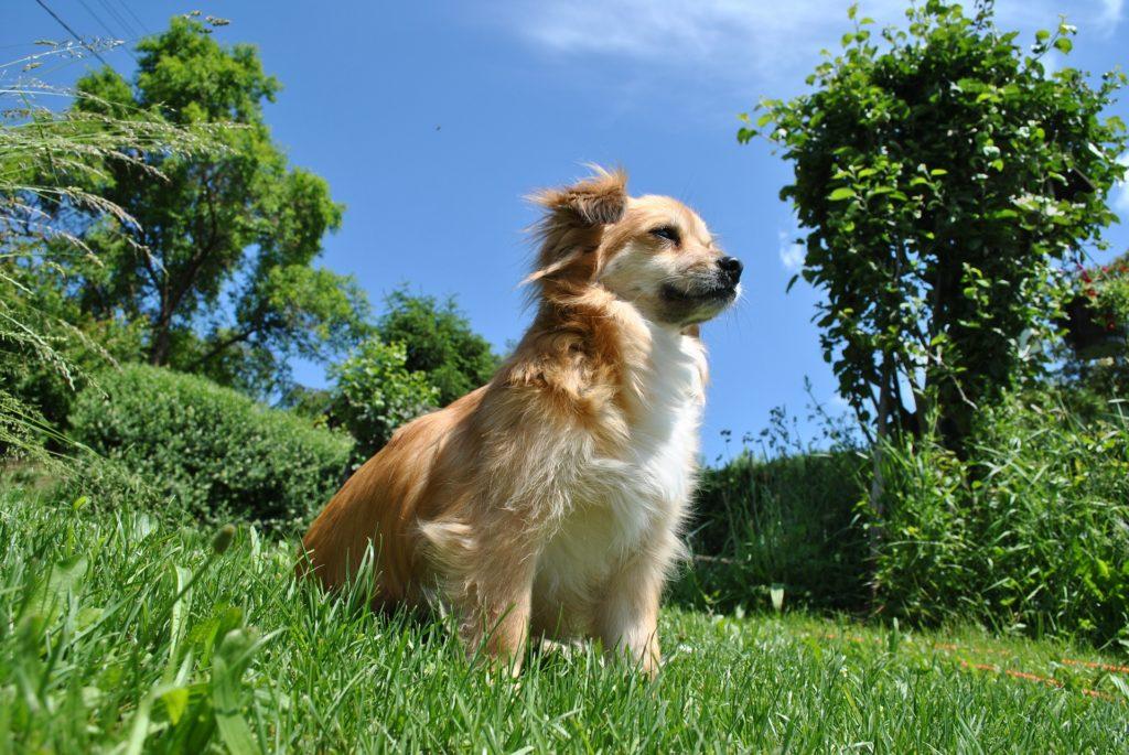 Occuper son chien en adoptant un autre chien : fausse solution