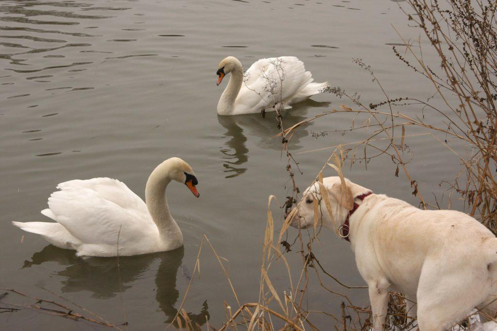 Présenter un chien à d'autres animaux