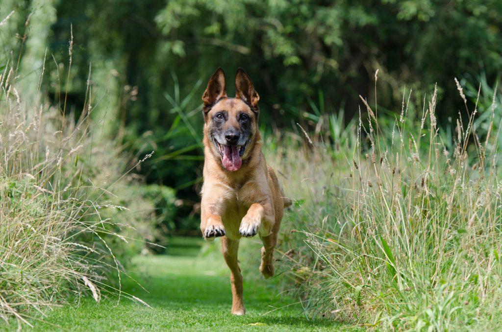 Promener son chien : une nécessité pour son bien-être