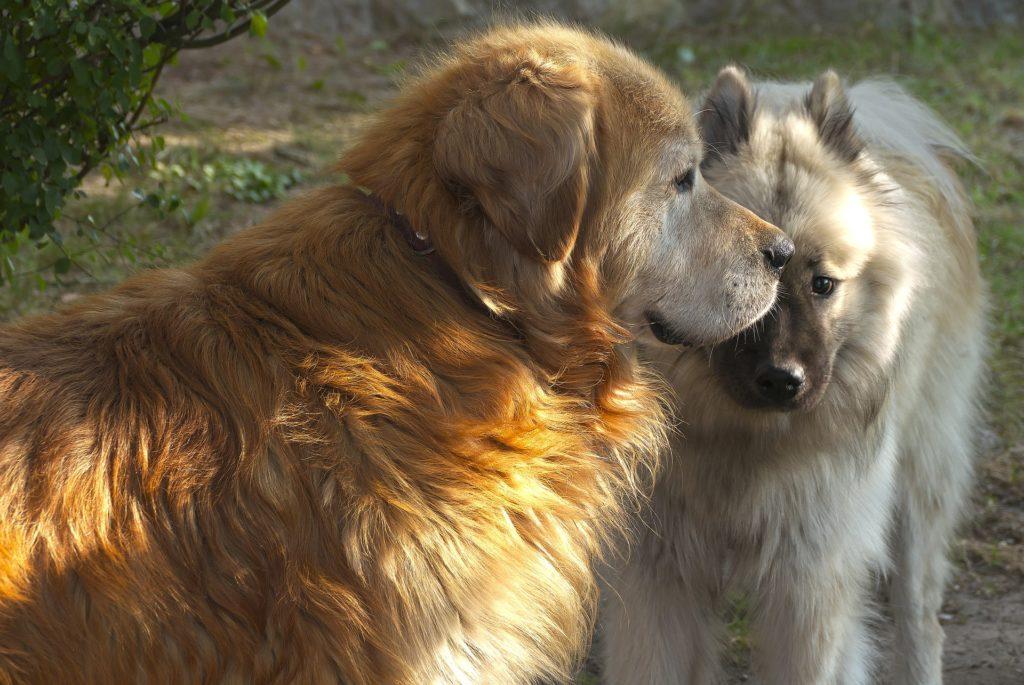 Un chien devrait connaître beaucoup de races de ses congénères