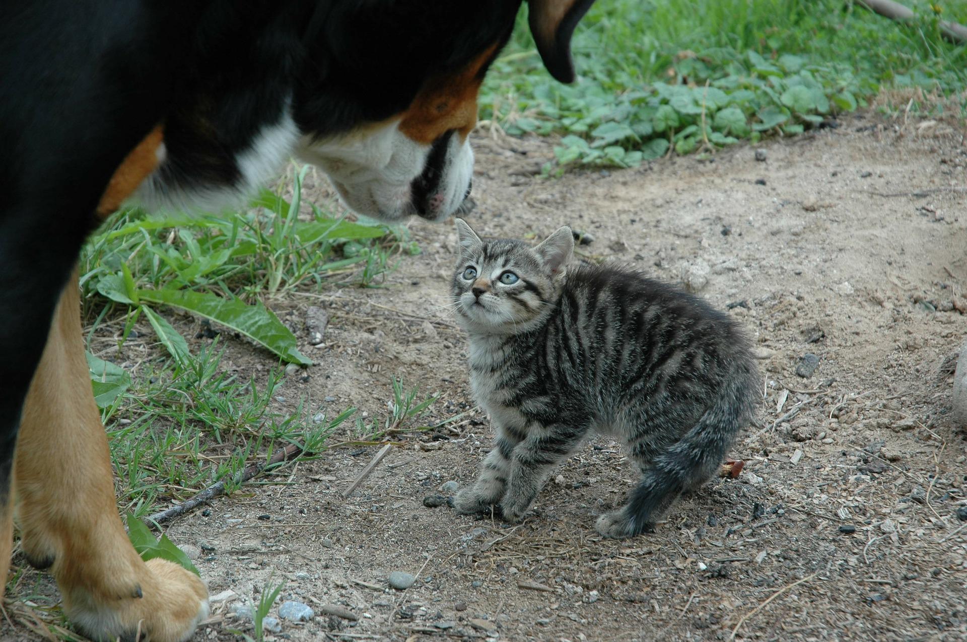 Chien rencontre chat