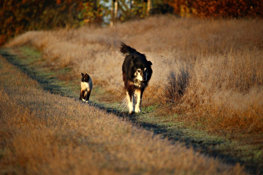 S'entendre comme chien et chat : des amis pour la vie
