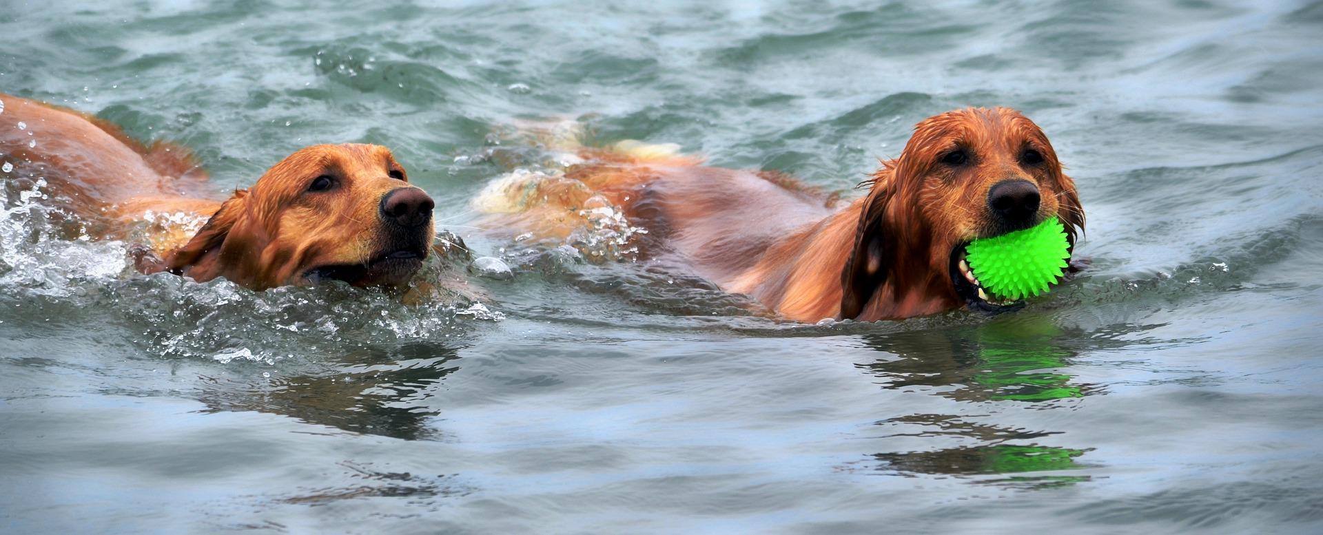 Tous les chiens ne savent pas nager