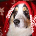Truffe sèche : mon chien est malade. Idée reçue n°2