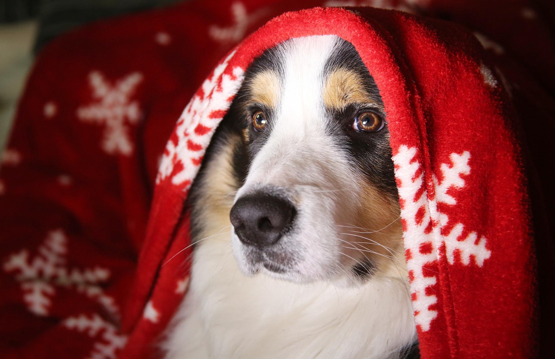 Un chien à la truffe sèche n'est pas forcément malade