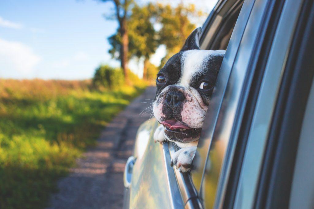 10 étapes pour résoudre le mal des transports du chien