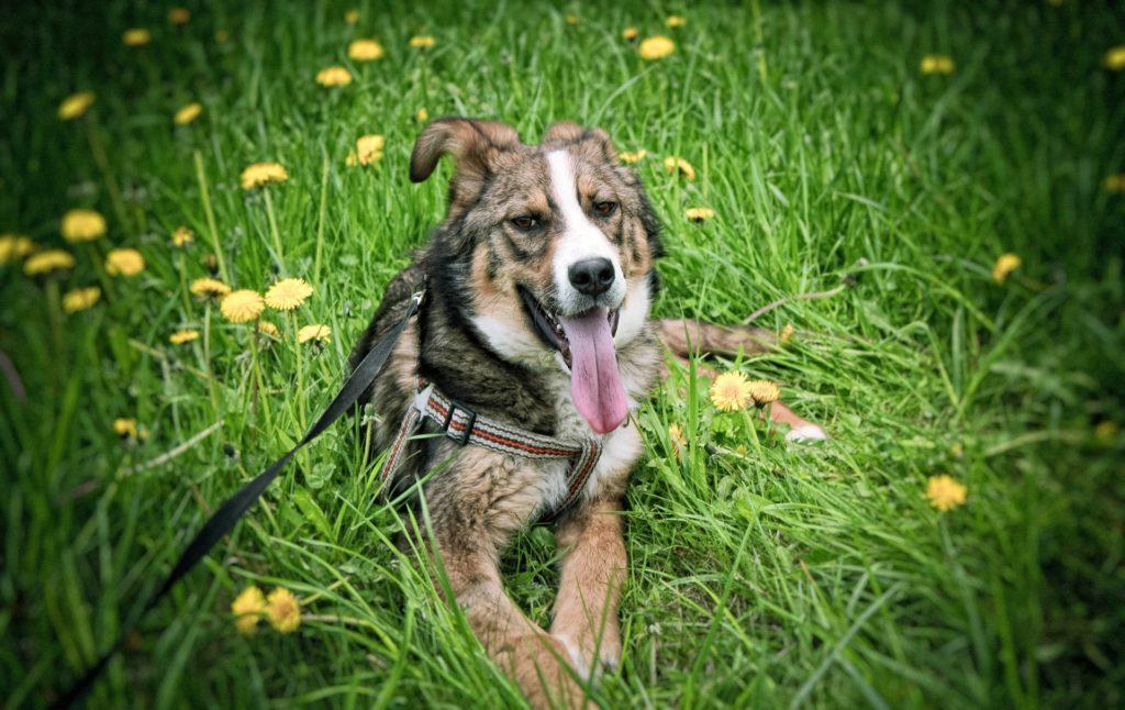 12 étapes pour apprendre l'ordre reste à son chien