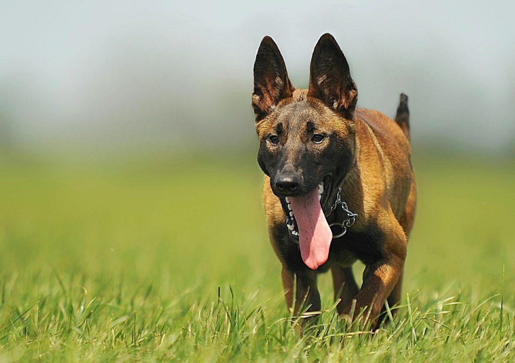 Activités sportives jeune chien