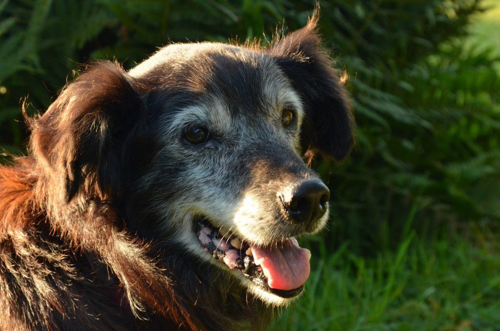 Compléments alimentaires et santé du chien