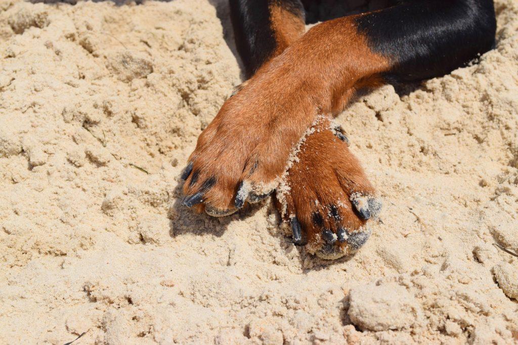 Gérer la coprophagie du chien en fonction de sa cause