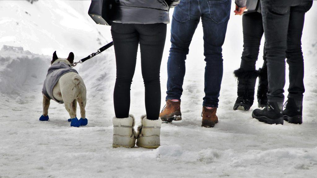 chien neige randonnée aléas climatiques