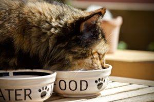 alimentation pour chat très dangereuse pour le chien