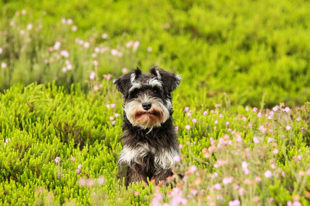 Composants analytiques de l'alimentation du chien
