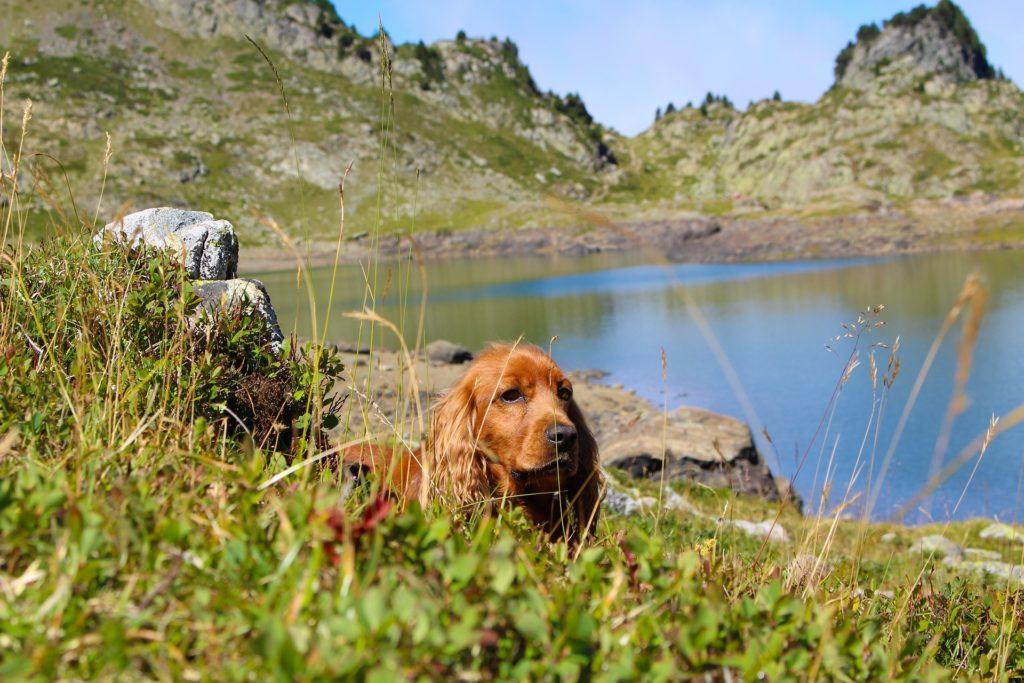 randonnée avec un chien : savoir anticiper les risques