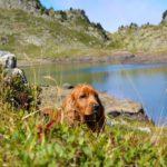 Randonnée : anticiper les risques pour son chien