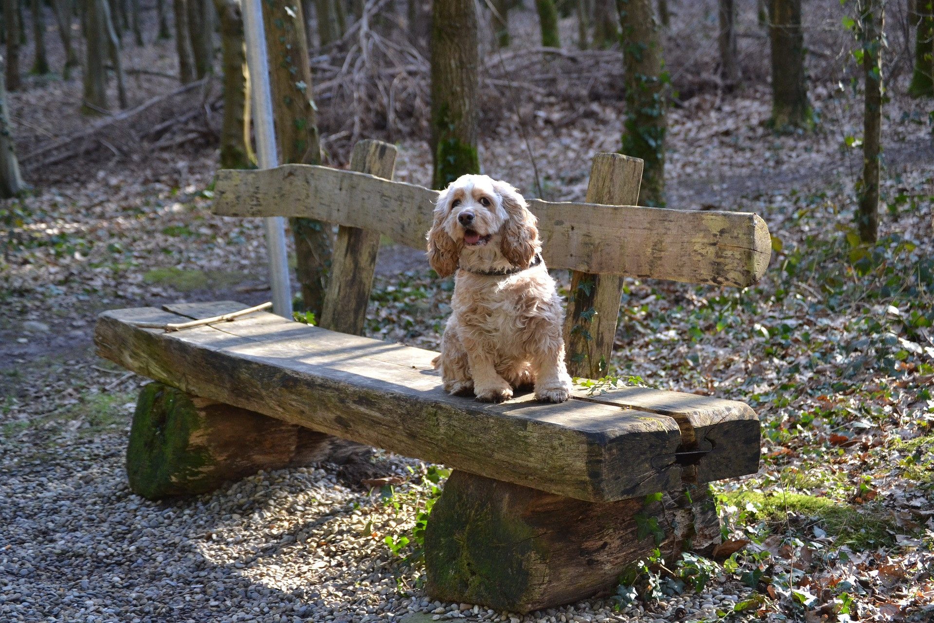 comment apprendre à son chien à rester sur place