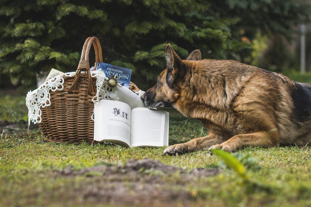 Éduquer son chien grâce au renforcement positif