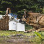 Éduquer un chien grâce au renforcement positif