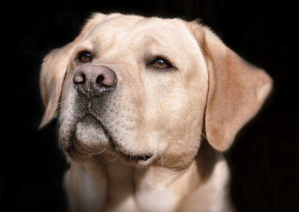 chien bien-être