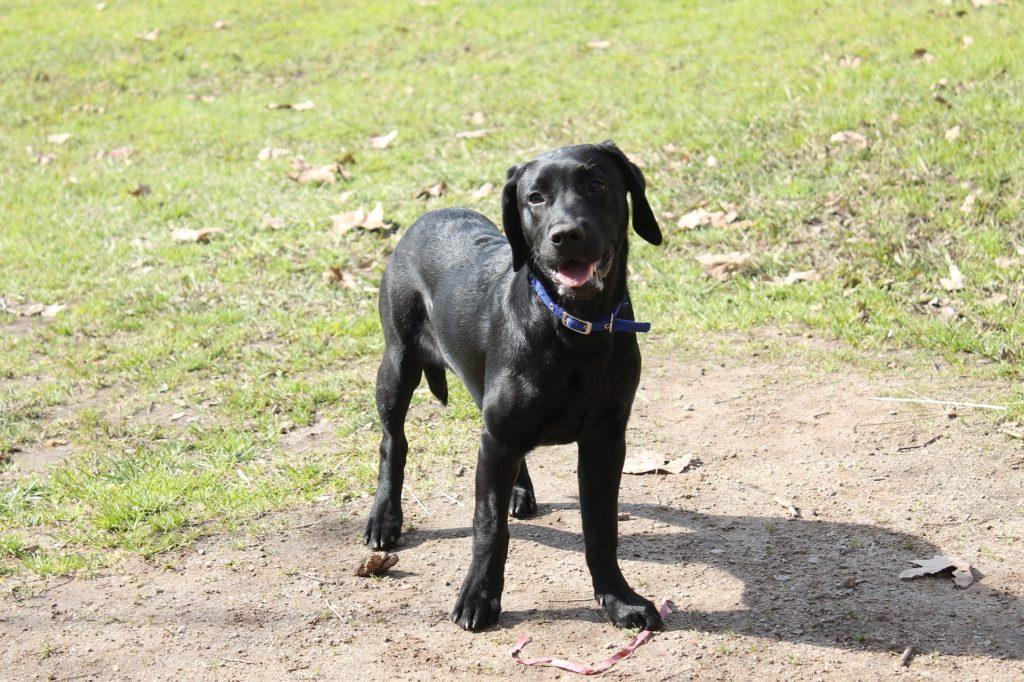 alimentation et santé générale du chien