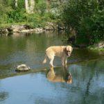 Castration : avantages et inconvénients pour le chien