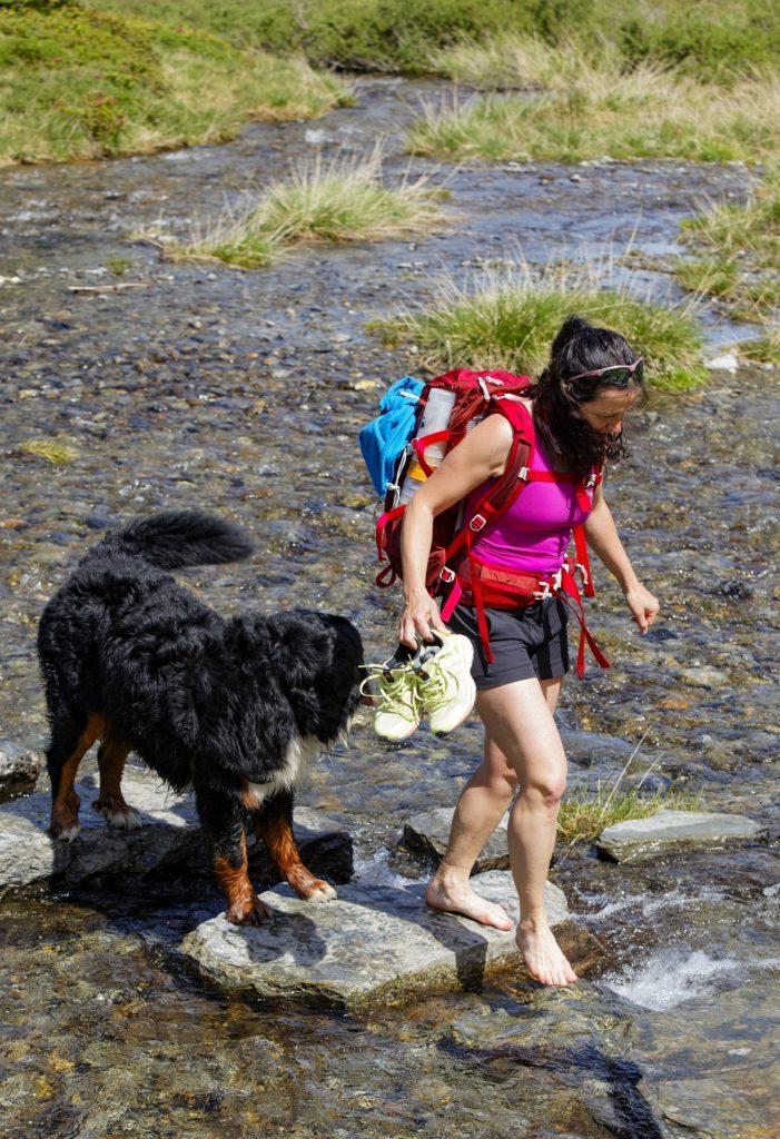 chien traversée de rivière