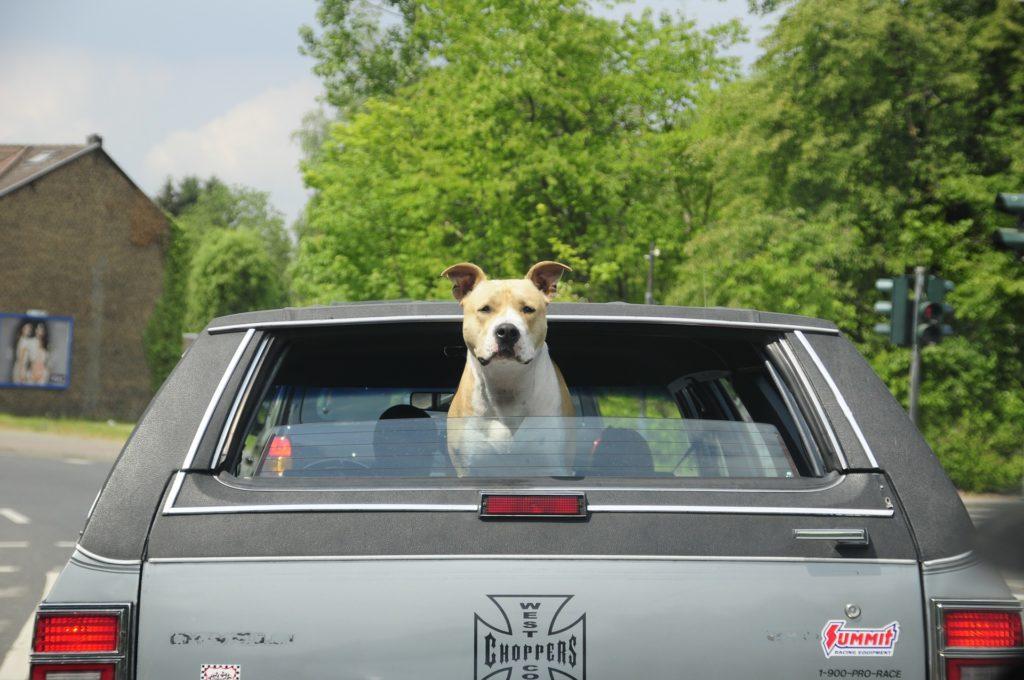 Une cage de transport pour chien en voiture est plus sécuritaire