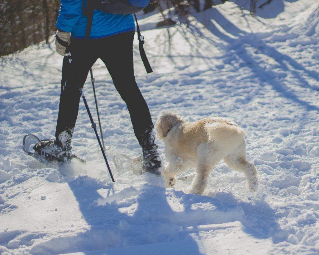 Commande derrière passages délicats chien