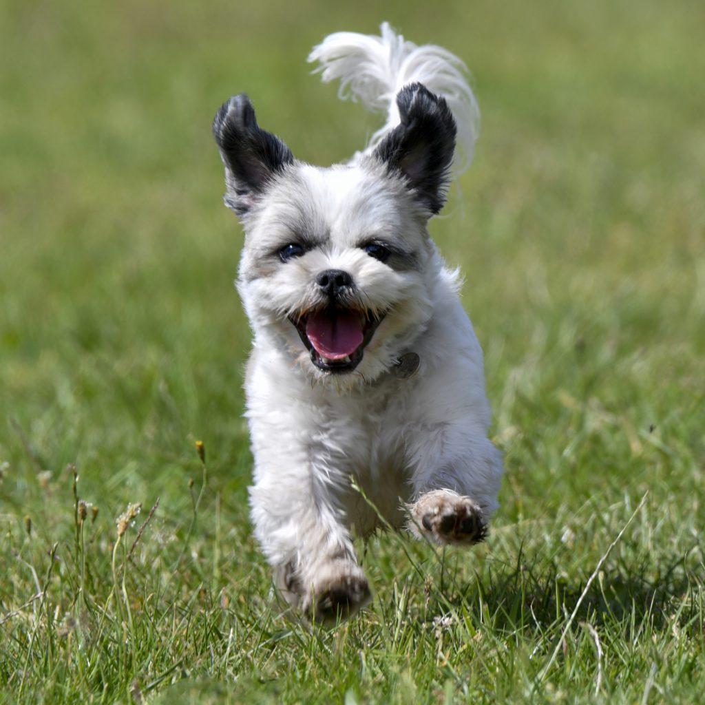 Le chien qui saute doit apprendre à se canaliser