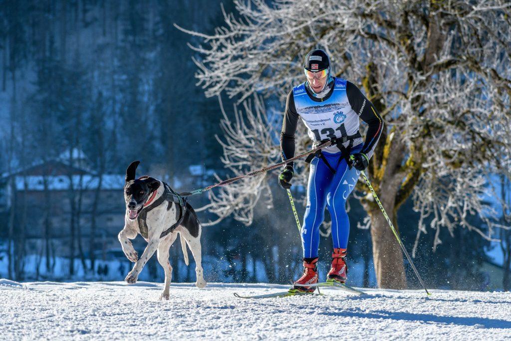 Sports canins tractés et ordre en avant