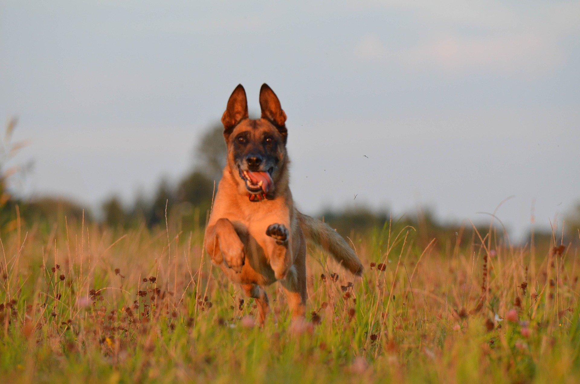 Matériel spécifique du chien âgé ou handicapé